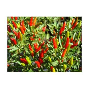 Mini-Chili*